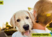 Chovatele zajímá hlavně účinnost veterinárních přípravků