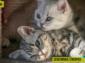 Díky rostoucímu počtu domácích mazlíčků se kategorii veteriny daří